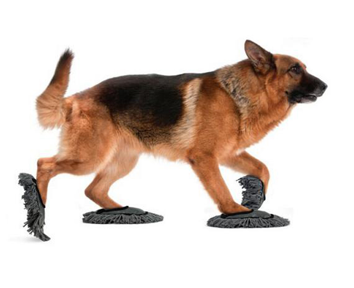 funny dog gadgets