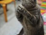 10-cat-funny-animals
