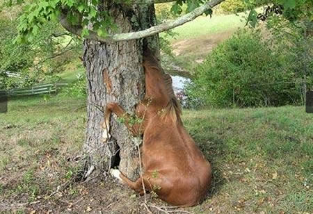 animal stuck pictures
