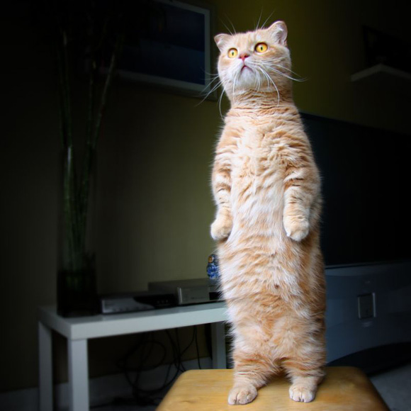 11 cat funny animals