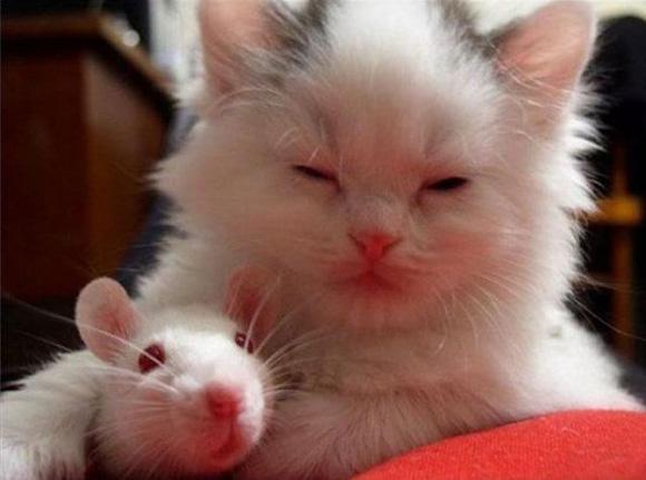 12 cat funny animals