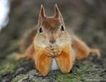 14-squirrel-funny-animals