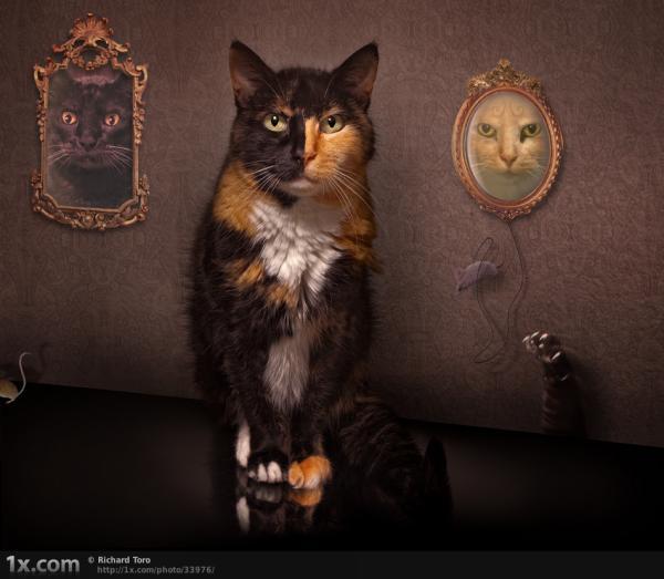cat funny animals