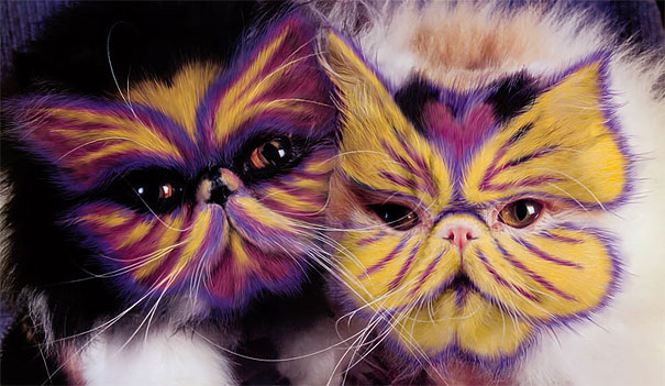 funny painted cats
