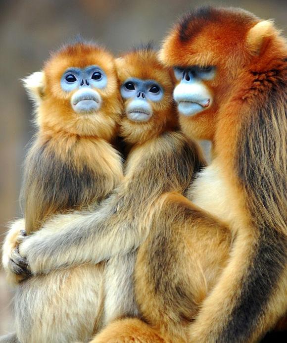5 monkey funny animals