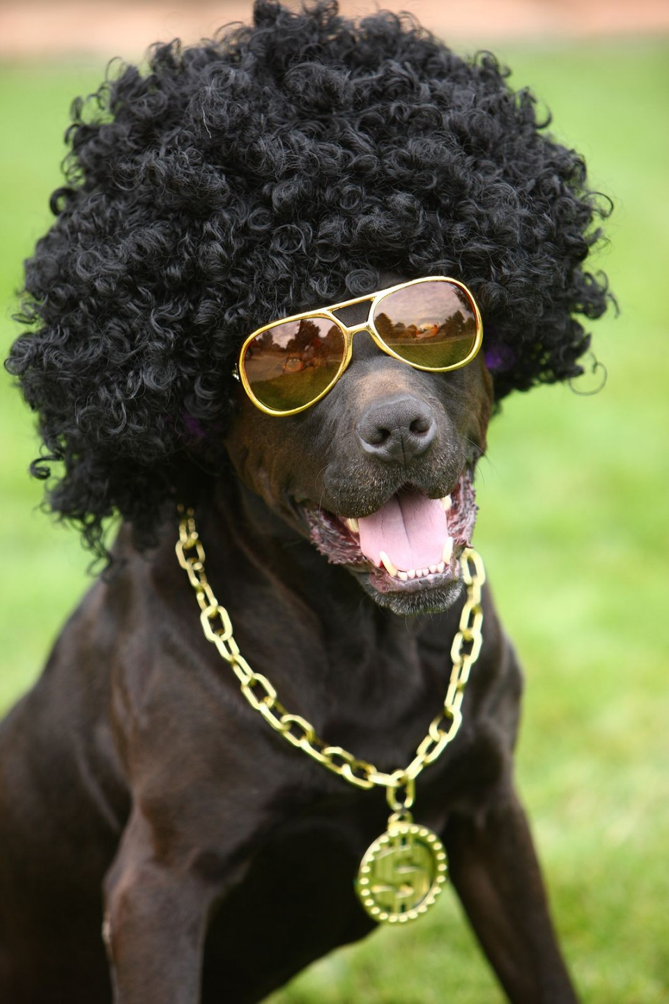 funny animal hairstyles dog curly hair