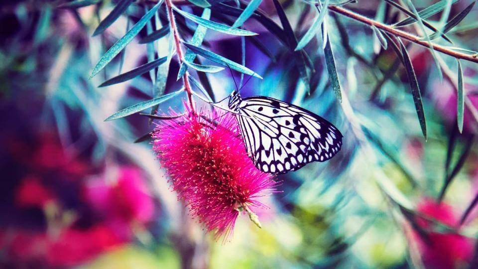 beautiful butterfly pictures zebra stripe