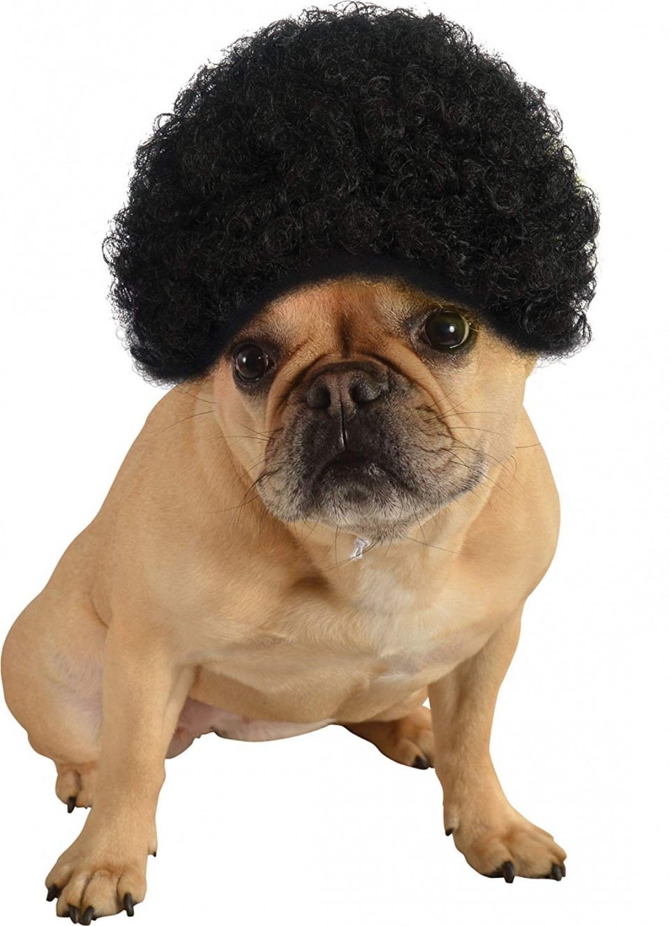 funny animal hairstyles pug head