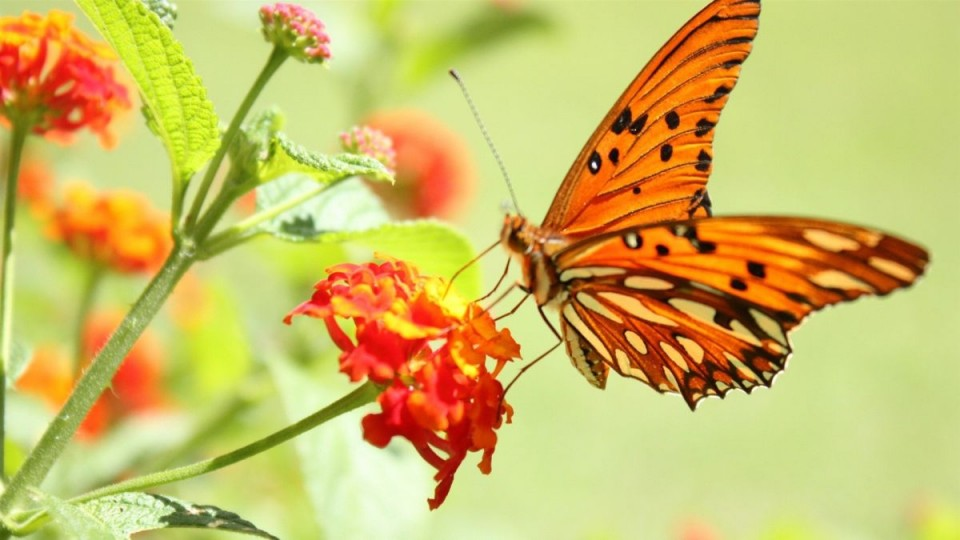 beautiful butterfly pictures orange