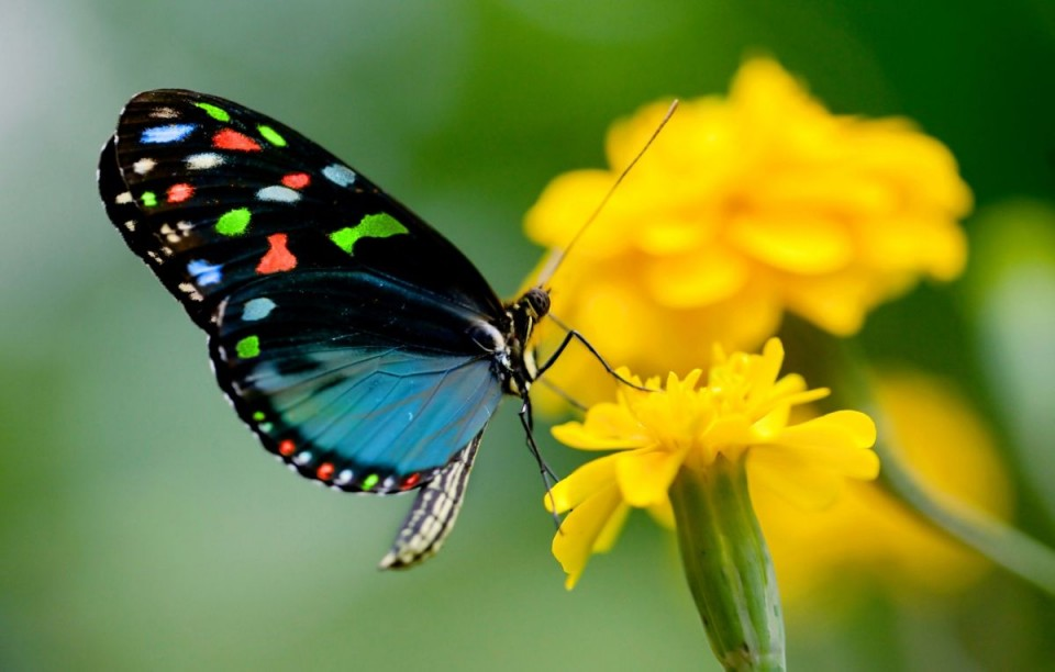 beautiful butterfly pictures spotted