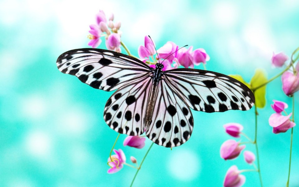 beautiful butterfly pictures spotted black