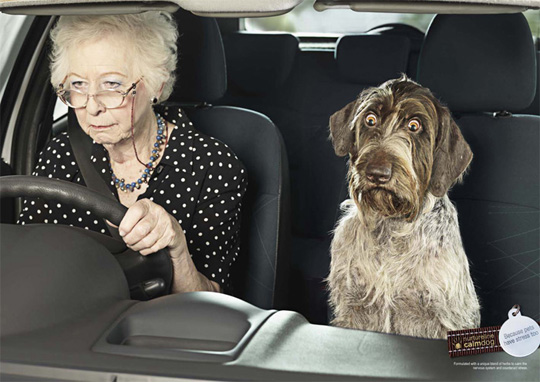 stress of pets funny ads