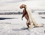 23-polar-bear - Funny Ads