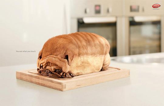 dog toast funny ads