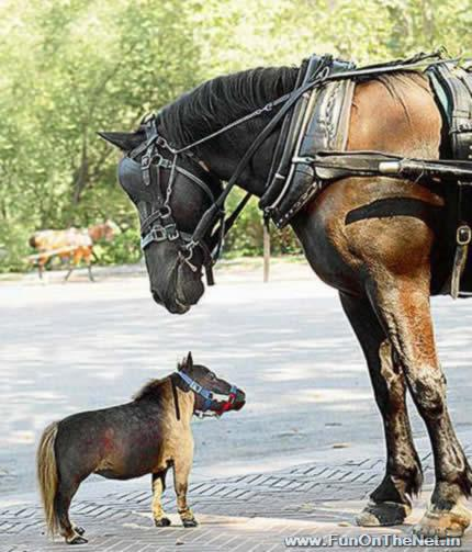A Big and a Small Horse