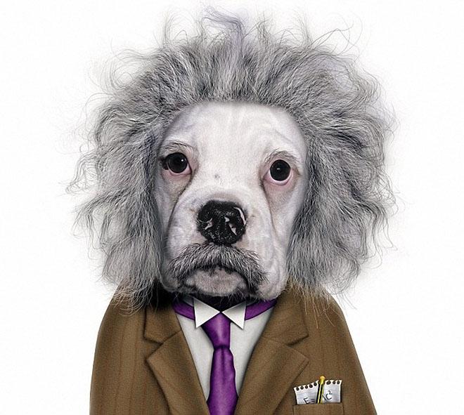 funny dog costume albert einstein