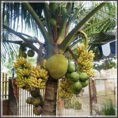all in one fruit tree