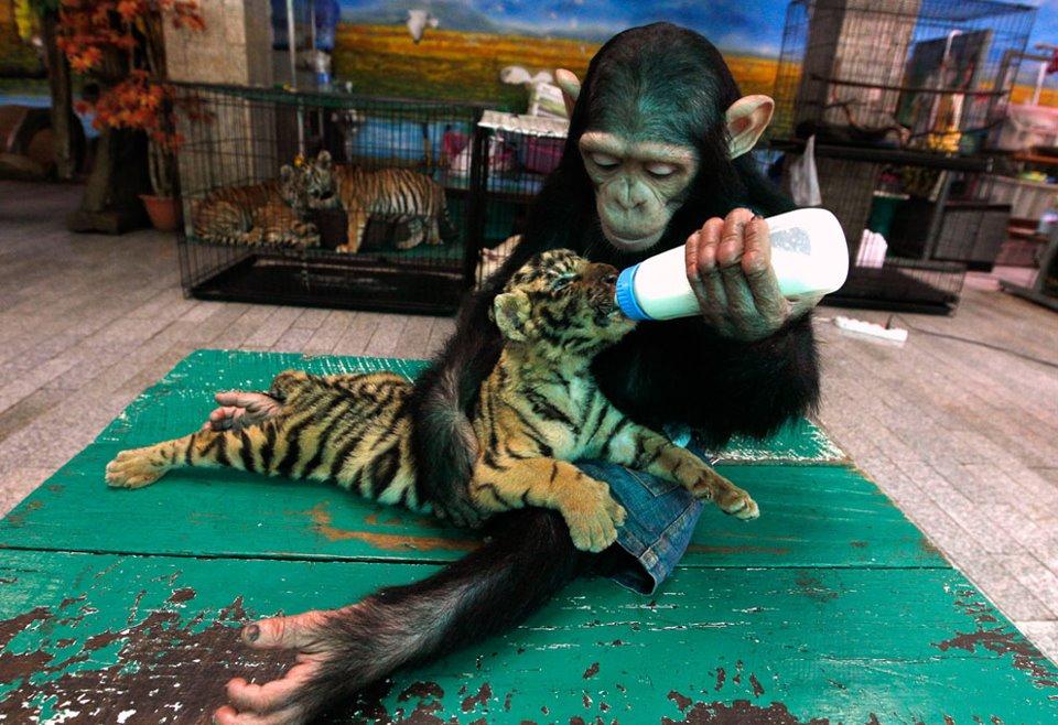 caring monkey