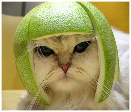 cat melon cap