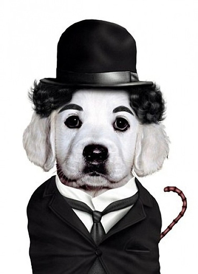Charlie Chaplin - Dog Disguisefamous person faces celebrity animal funny