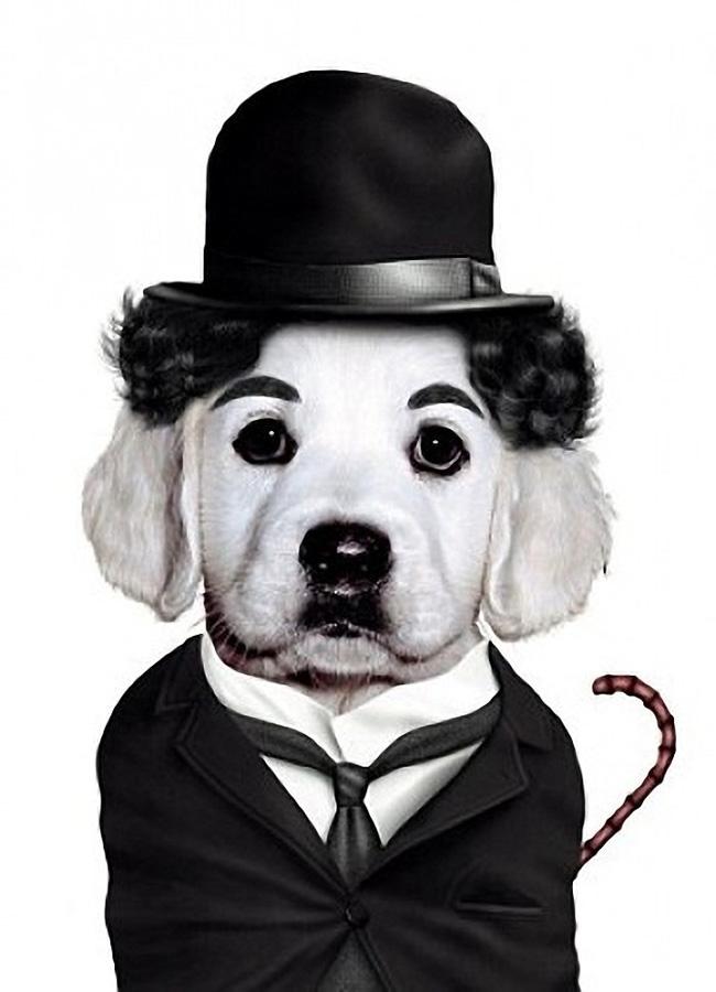 funny dog costume charlie chaplin