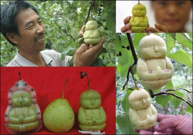 diy pear shaped as buddha
