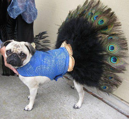 Dog%20Fashion%20show 24 Most Funniest Animal Pictures for your inspiration