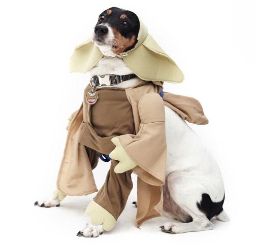 Dog-Fashion-Show-2012 (1)