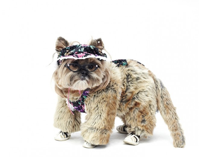 Dog-Fashion-Show-2012 (10)