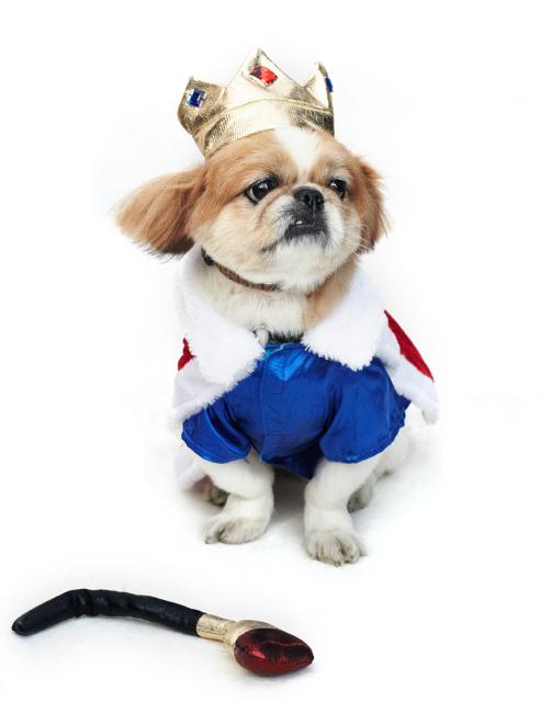 Dog-Fashion-Show-2012 (12)