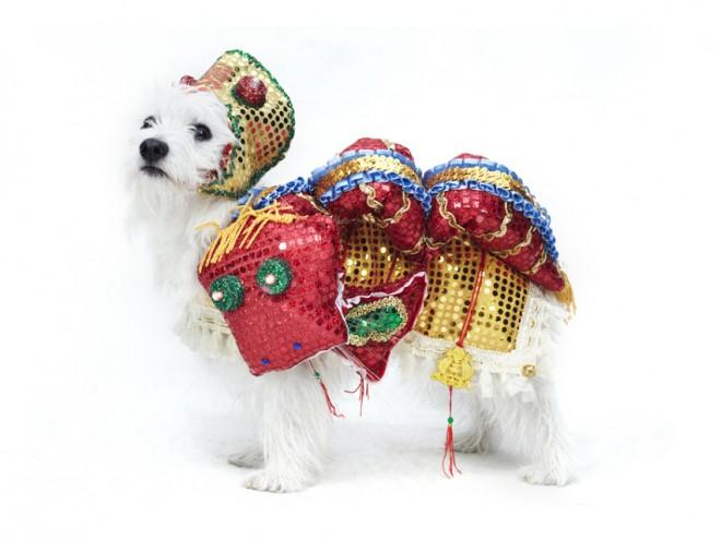 dog fashion show 2012 13