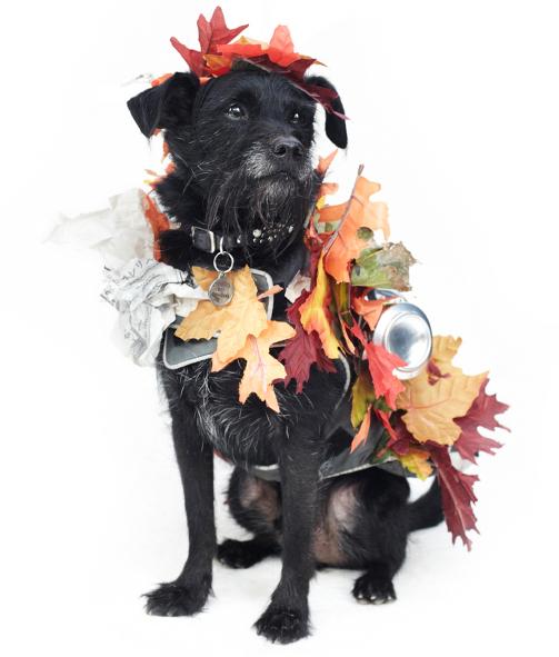 dog fashion show 2012 3