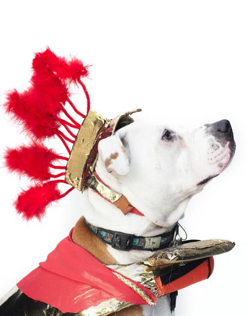 dog fashion show 2012 4