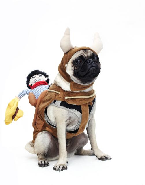Dog-Fashion-Show-2012 (5)
