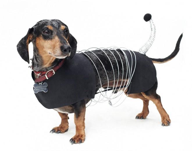 Dog-Fashion-Show-2012 (6)