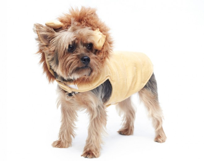 Dog-Fashion-Show-2012 (7)