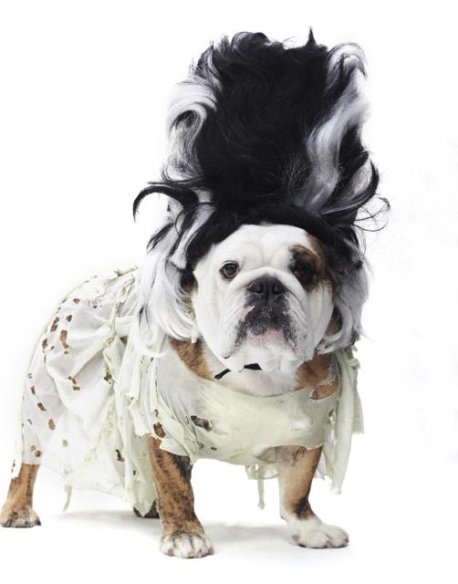Dog-Fashion-Show-2012 (8)