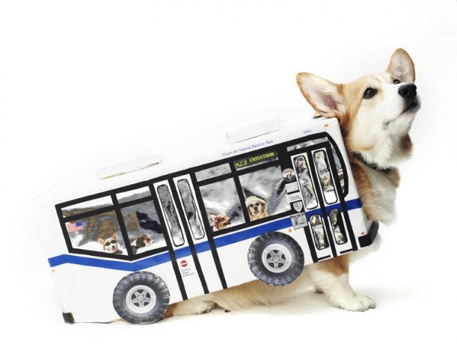 dog fashion show 2012 9