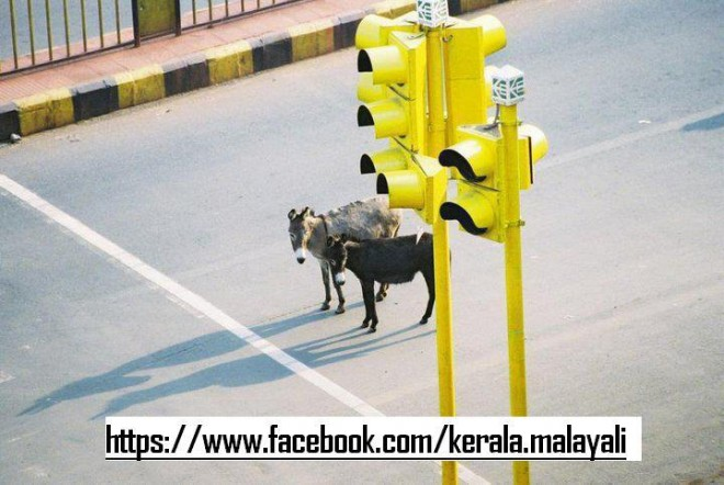 Donkey waiting in the signal