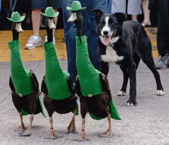ducks fashion show 2
