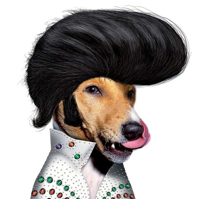 elvis presley   dog disguise