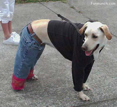 fashionable dog