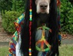 Hippie Dog love and peace