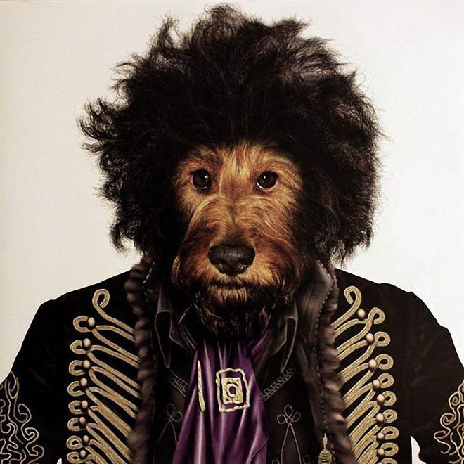 funny dog costume jimi hendrix