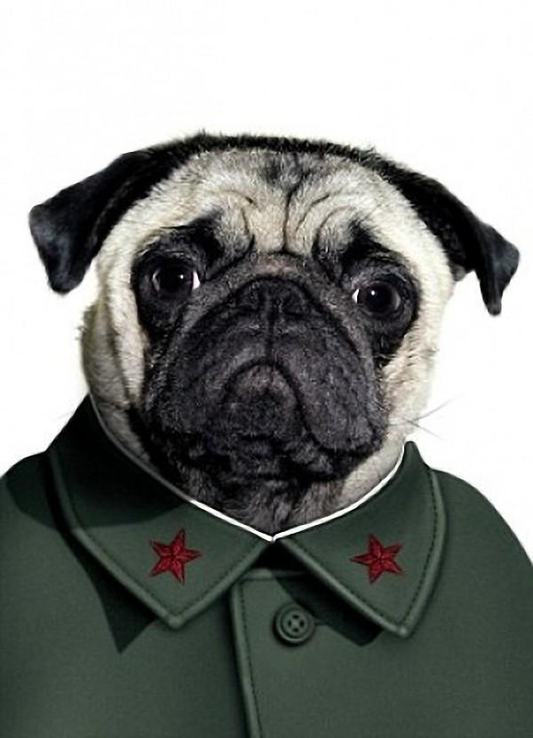 funny dog costume mao tse tung