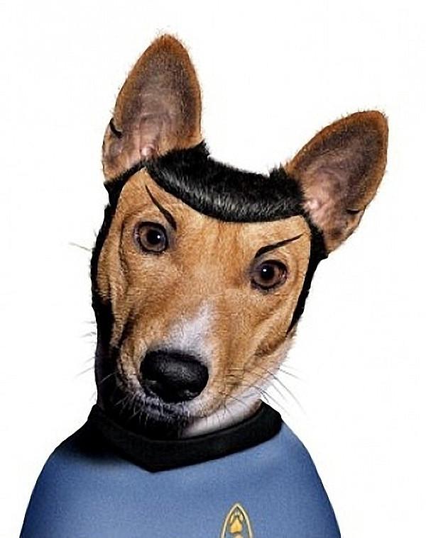 funny dog costume mr. spock