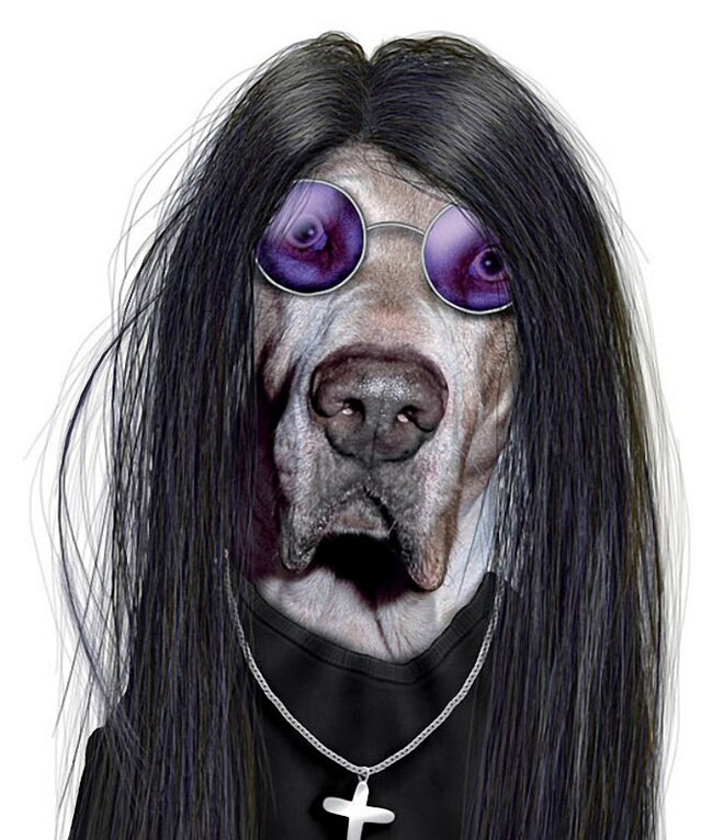 Ozzy - Dog Disguisefamous person faces celebrity animal funny
