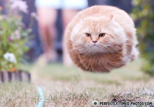 funny cat perfectly timed photograph