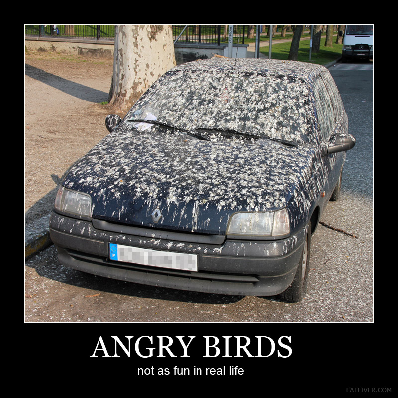 real angry birds