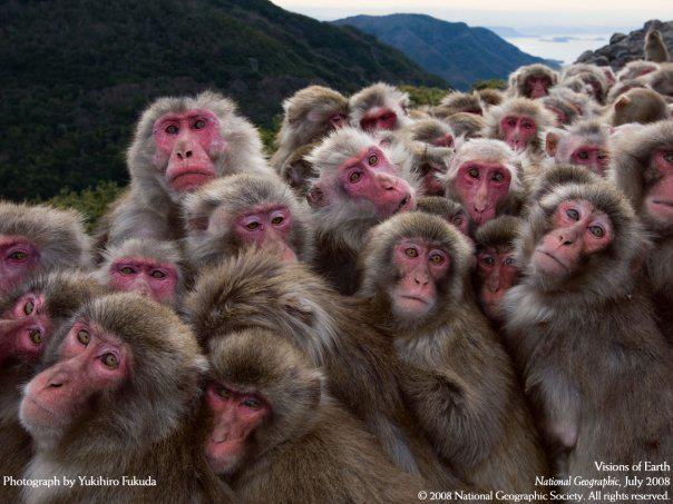 red monkeys